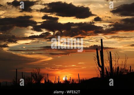Arbres Silhouette contre le ciel au coucher du soleil Banque D'Images