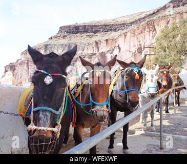 Portrait de chevaux sur Mountain Against Sky Banque D'Images