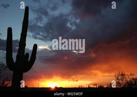 Saguaro Silhouette contre ciel nuageux pendant le coucher du soleil Banque D'Images