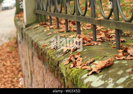 Des feuilles sèches sur les murs couverts de mousse au cours de l'automne Banque D'Images