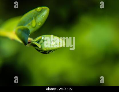 D'un plan macro plante humide Banque D'Images