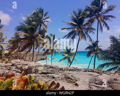 Vue sur les palmiers sur la plage calme Banque D'Images