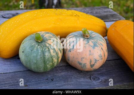 De la récolte d'automne en citrouilles et courgettes jaunes sur la table dans le jardin. Banque D'Images