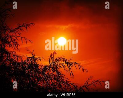 Close-up Section haute de Cropped Tree Against Sunset Banque D'Images