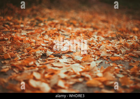 Les feuilles jaune tombé au sol arrière-plan gros plan détail - automne doré saison colorés évolution du concept nature scène scène papier peint. Séle