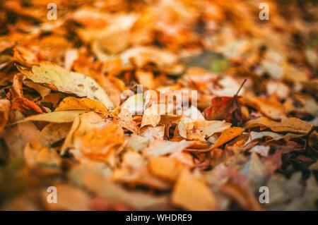 Les feuilles jaune tombé au sol arrière-plan gros plan détail - automne doré saison colorés évolution du concept nature scène scène papier peint.