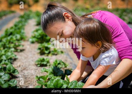 L'autonomie organique et la durabilité, de l'ensemencement dans une ferme