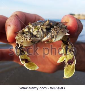 Cropped Hand Holding Crab Banque D'Images