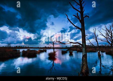 Stormy sunset over bog avec arbres morts, Dwingelderveld, Drenthe, Pays-Bas Banque D'Images