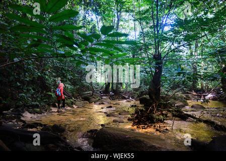 Femme avec sac à dos à la découverte au milieu d'arbres en forêt