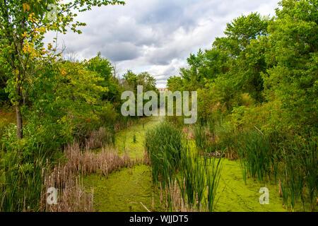 Un flux lents dans les zones humides est couvert dans les algues vertes sur sa surface comme il serpente à travers des roseaux et arbres vers un bâtiment au loin. Banque D'Images