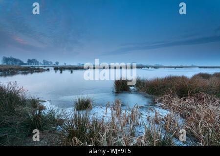 Lac sauvage gelé en hiver, Onlanden, Drenthe, Pays-Bas Banque D'Images