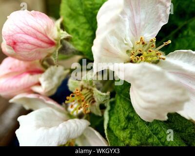 Close-up de fleur blanche Banque D'Images