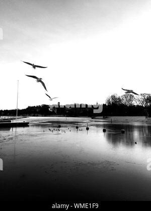 Vol de mouettes au-dessus de River Banque D'Images