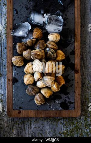 Portrait de quelques matières premières palourdes, entouré de glace pilée, sur un plateau en bois et ardoise noire, placé sur une table en bois rustique gris Banque D'Images