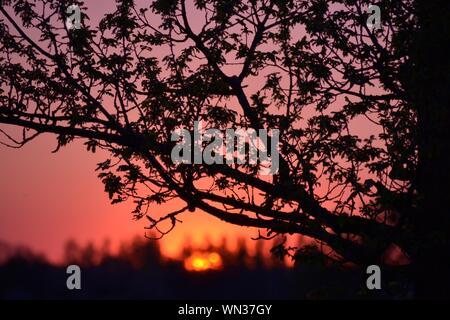 Arbre Silhouette recadrée contre Route panoramique Sky Banque D'Images