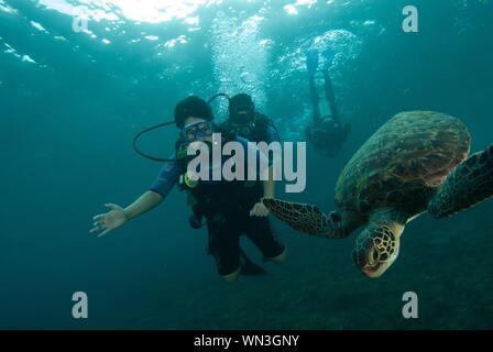 Les gens de mer en plongée Banque D'Images