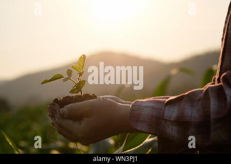 Les mains coupées de Farmer Holding plants à la ferme pendant le coucher du soleil Banque D'Images