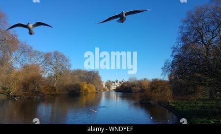 Low Angle View Of Vol de mouettes au-dessus de River Banque D'Images