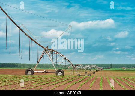 Système d'irrigation à pivot dans le soja cultivé et champ de maïs, le matériel agricole pour l'arrosage des cultures Banque D'Images