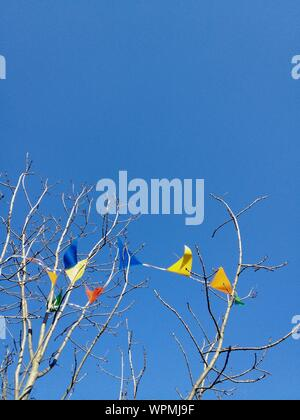 Section haute de branches nues contre Ciel Bleu clair Banque D'Images