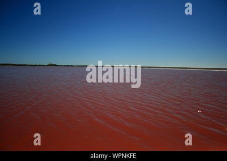 Hutt Lagoon, Lac Rose, Gregory, zone de Kalbarri, côte ouest, l'ouest de l'Australie Banque D'Images