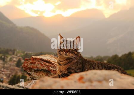 Portrait de Cat Sitting contre montagne pendant le coucher du soleil Banque D'Images
