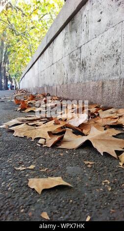 L'automne les feuilles sèches par Wall Street sur Banque D'Images