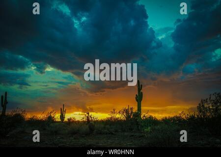 De plus en plus des cactus dans le désert contre ciel nuageux pendant le coucher du soleil Banque D'Images