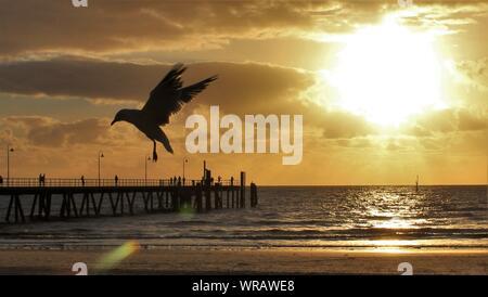 Silhouette mouette voler à l'encontre de la plage pendant le coucher du soleil Ciel Banque D'Images