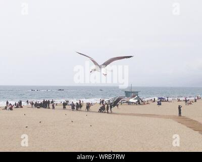 Low Angle View Of Seagull Flying Over Beach Banque D'Images