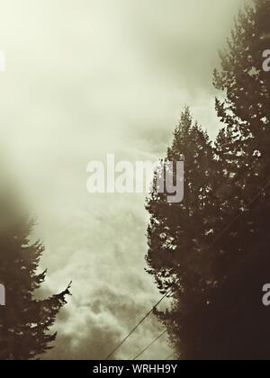 Portrait de Silhouette des arbres contre les nuages Banque D'Images