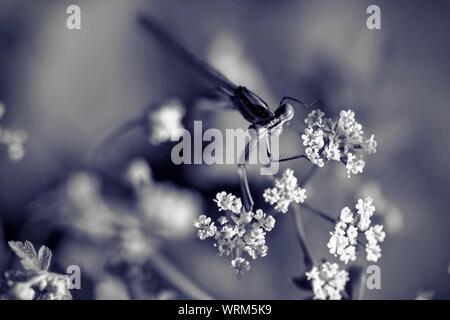 Close-up de libellule sur fleur