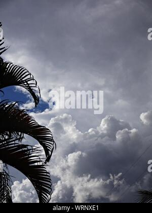Cropped Palm Tree Against Cloudy Sky Banque D'Images