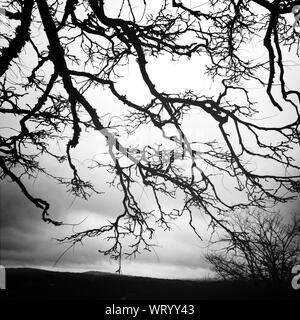 Close-up de Silhouette arbre nu contre le ciel Banque D'Images