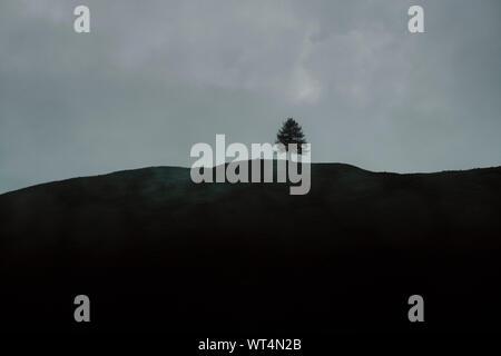 Un peu seul arbre isolé colline paysage horizon avec cloud - dernier arbre debout Banque D'Images