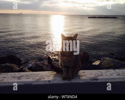 Portrait de chat sur mur de retenue par la mer contre le ciel au coucher du soleil Banque D'Images