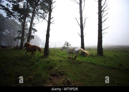 Deux chevaux qui courent dans la forêt