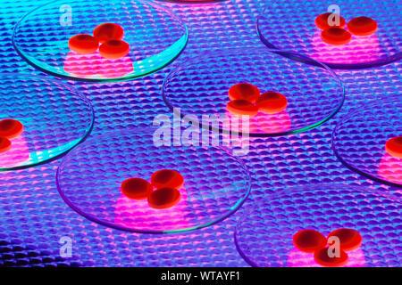 Pilules sur boîtes de Petri Banque D'Images