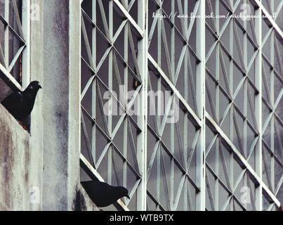 Low Angle View d'oiseaux de se percher sur la fenêtre Banque D'Images