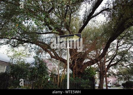 Low Angle View Of One Way Sign contre des arbres Banque D'Images