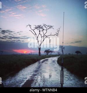 Les arbres nus sur le paysage contre Coucher du Soleil Banque D'Images