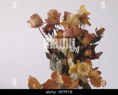 Close-up de feuilles sèches sur le mur Banque D'Images