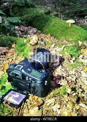 Portrait de l'appareil photo reflex numérique sur terrain en Forêt Banque D'Images