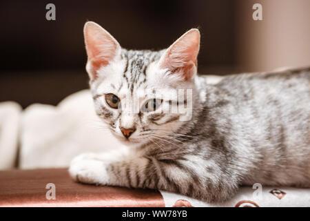 Le chat couché sur maison avec belle couleur de fond. Chat dormir dans la maison sur un flou fond clair. Les chats reste après avoir mangé. Banque D'Images
