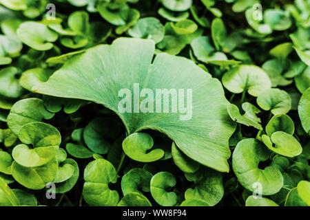 Concept d'être spécial, une seule feuille se distingue du reste de la plante, avec des tons doux et ajouté du grain de film.