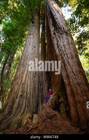 Une femme à l'intérieur d'un séquoia géant et Redwood, certains des plus gros arbres sur la terre, le long de la côte californienne à l'état et National Redwoods pa