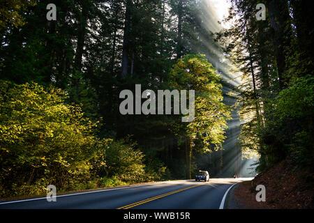 Une route à travers des bosquets d'arbres Séquoia géant et le séquoia avec rayons de soleil venant à travers les arbres le long de la côte californienne à les séquoias National a