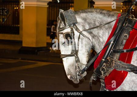 Cheval tirant une voiture à la place mayor plaza de Armas de Lima au Pérou Banque D'Images
