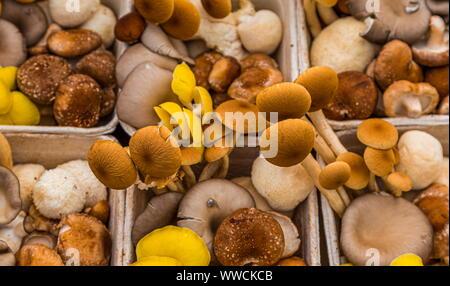 Les champignons en boîte Banque D'Images